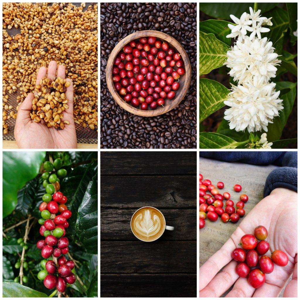 Celebrate Coffee in Seattle